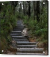 Forest Pathway Acrylic Print