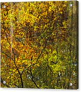 Forest Pattern Acrylic Print