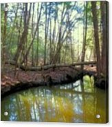 Forest Pool Acrylic Print