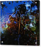 Forest Puddle Acrylic Print