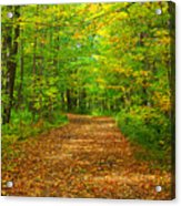 Forest Road In The Fall Acrylic Print