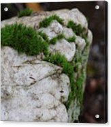 Forest Rock With Moss Acrylic Print