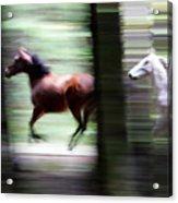 Forest Run Acrylic Print