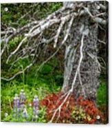 Forest Scene Acrylic Print