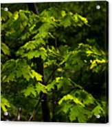 Forest Shades Acrylic Print