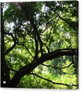 Forest Silhouette Acrylic Print