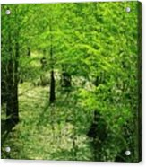 Forest So Green Acrylic Print