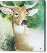 Forest Spirit Acrylic Print