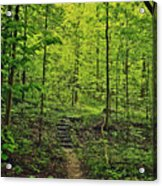 Forest Stairs Acrylic Print