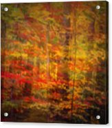 Colorful Forest, Smoky Mountains, Tennessee Acrylic Print