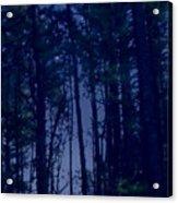 Forest Starlight Acrylic Print
