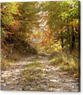 Forest Stone Path Acrylic Print