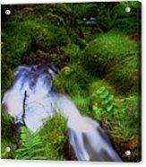 Forest Stream. Benmore Botanic Garden Acrylic Print