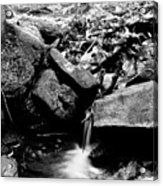 Forest Stream In Black And White Acrylic Print
