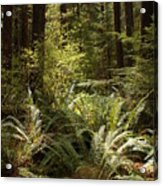 Forest Sunlight And Shadows  Acrylic Print