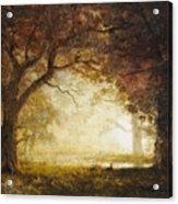 Forest Sunrise Acrylic Print