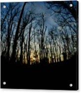 Forest Sunset Acrylic Print