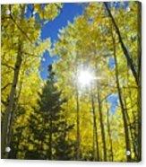 Forest Sunshine Acrylic Print
