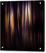 Forest Surround Acrylic Print
