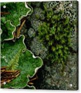 Forest Textures Acrylic Print