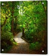 Forest Trail Acrylic Print