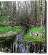 Forest Trees Creek Pathway Acrylic Print