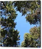 Forest Treetops Acrylic Print