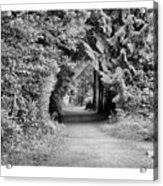 Forest Tunnel Acrylic Print