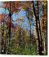 Forest Veteran Acrylic Print