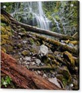 Forest Vibrance Acrylic Print
