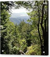 Forest View From Mt Tamalpais Acrylic Print