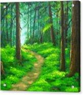 Forest  Walk Acrylic Print
