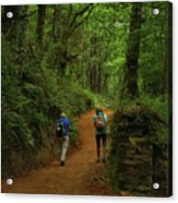 Forest Walkers, El Camino, Spain Acrylic Print