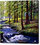 Forest Waters Acrylic Print by David Lloyd Glover