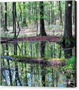 Forest Wetland Acrylic Print