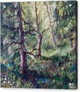 Forest Wildflowers Acrylic Print