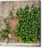 Forest With Green Trees From Above Acrylic Print