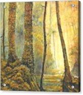 Forest Wonderment Acrylic Print