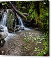 Forests Deep Acrylic Print