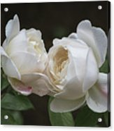 Forever And Always - Desdemona Roses Acrylic Print