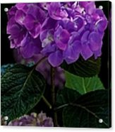 Forever Violet Acrylic Print