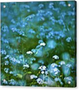 Forget-me-not Flower Patch Acrylic Print