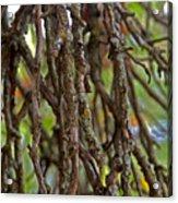 Form Color Texture Pattern Plants 15 Acrylic Print
