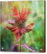 Formal Extravagance 2471 Idp_2 Acrylic Print