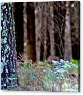 Forrest Acrylic Print