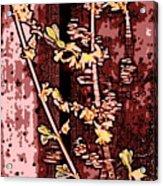 Forsythia Branch Acrylic Print
