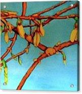 Forsythia Acrylic Print