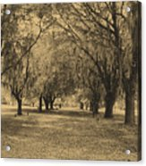 Fort Frederica Oaks Acrylic Print
