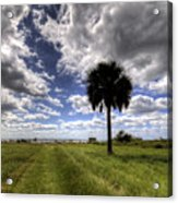 Fort Moultrie Palm  Acrylic Print