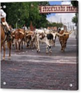 Fort Worth Cattle Drive Acrylic Print